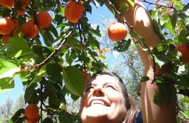 ¿Por qué ver tu proyecto como un árbol frutal?