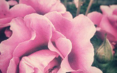 Autocuidado: El arte de amarte a ti misma