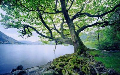 Los árboles y su flexibilidad: inspiración para reinventarnos en tiempos de pandemia