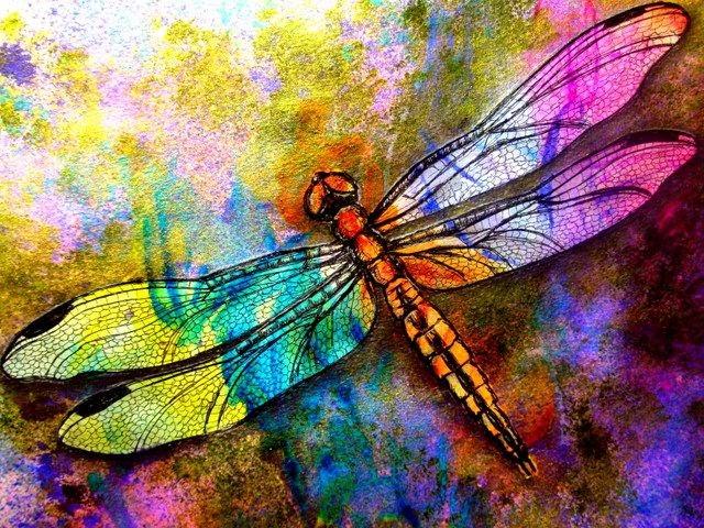 La medicina de la libélula